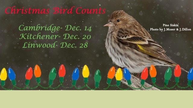 feature roll_Christmas Bird Count