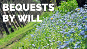 bequests by will, flowers on forest floor