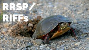 RRSP/RIFFs, Turtle